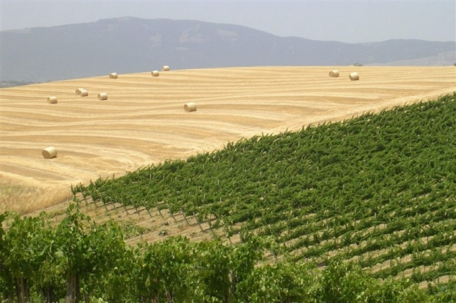 Agriturismo Abruzzo Met Zwembad 9