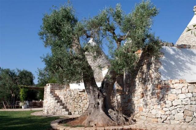 Originele Trullo Voor 8p Met Pool In Puglia 12