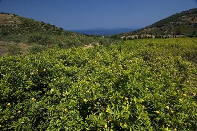 Sicilie Vakanties Agriturismo Met Zeezicht En Zwembad 8